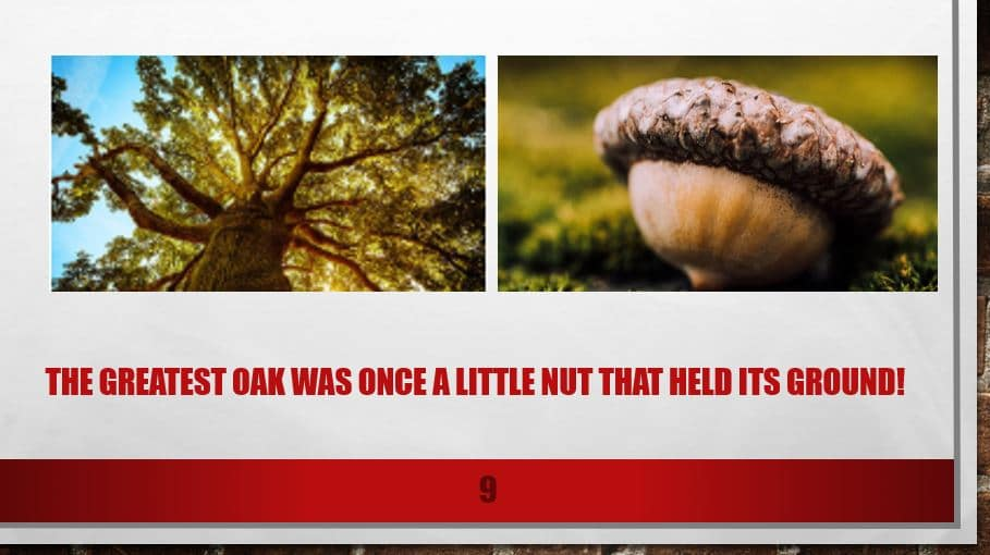 The greatest oak was once a little nut that held its ground!